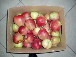 Cвежие яблоки