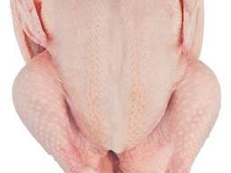 Eksporter i dostawca całego kurczaka halal