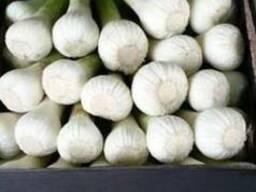 Fresh garlic - photo 2