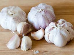 Fresh Garlic for sale .
