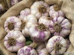 Garlic in bulk