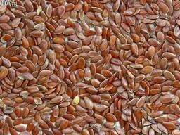 Семена льна FCA Павлодар Казахстан