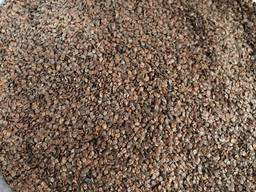 Álnus glutinósa , Семена ольхи, ольха семена, ольха черная семена, семена ольхи клейкой