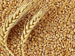 Milling Wheat for sale FCA