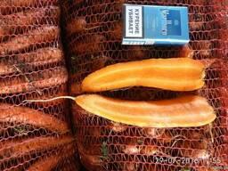 Морковь Казахстан