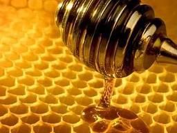 Мёд опт