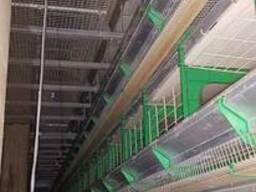 Оборудование для птицефабрик - фото 4