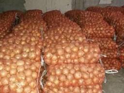 Onions from Uzbekistan
