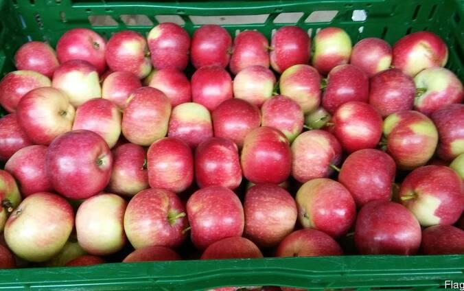 Продам яблокие летние