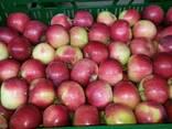 Продам яблокие летние - фото 2