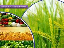 Producent i dostawca pestycydów na całym świecie