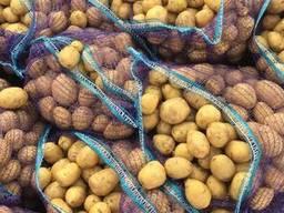 Sprzedam hurtowo ziemniaki