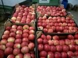 Свежие польские яблоки 2018 - фото 3