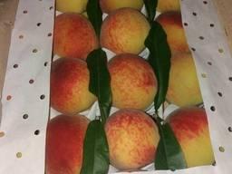 Свежий абрикос и нектарин из Узбекистана