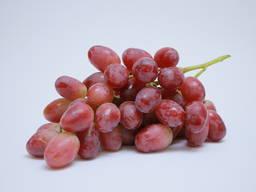 Виноград «Ризамат Ота»