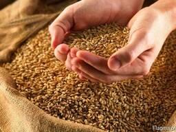 Wheat from Ukraine