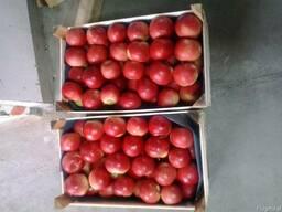 Яблоки Польские - фото 5