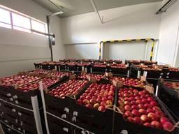 Яблоки польские